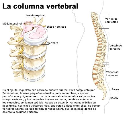 Los dolores en el lado derecho de la espalda por la noche